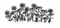 Blumenwiese_0_1948_2.jpg